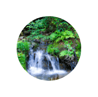 水源の森百選